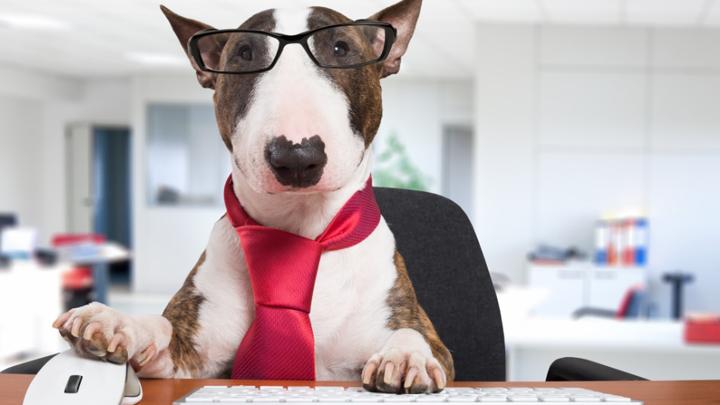 mascotas-trabajo