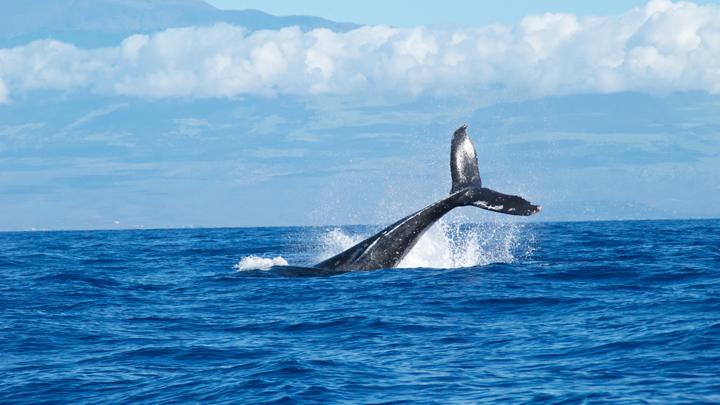 orca-habla