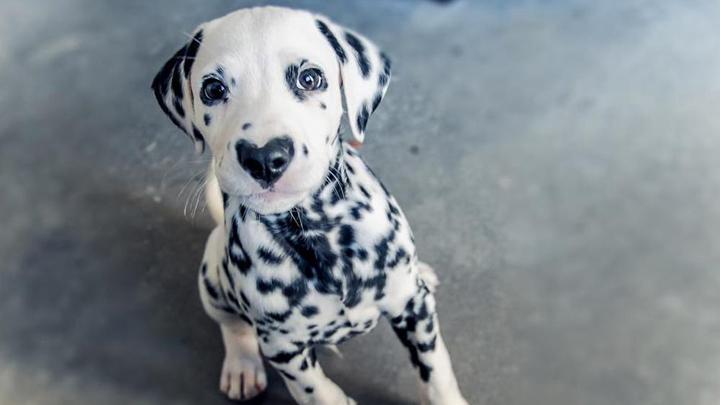 perro-nariz