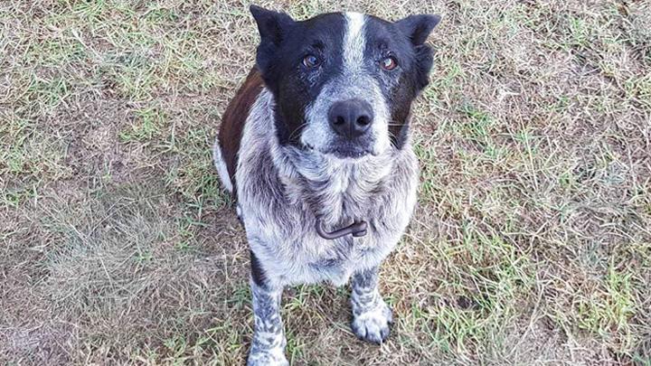 perro-protector