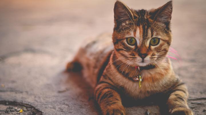 adoptar-gatos-callejeros