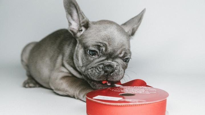 comida-perros