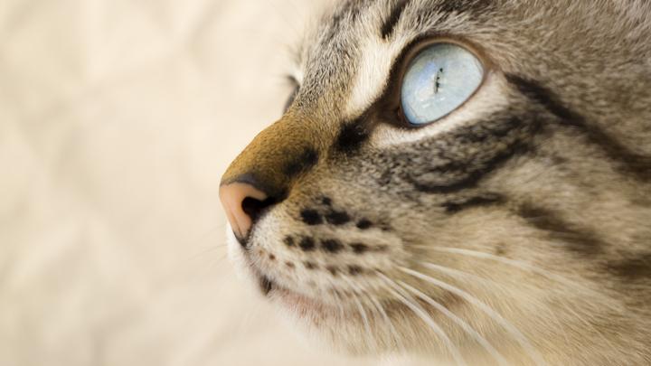 ojos-gatos