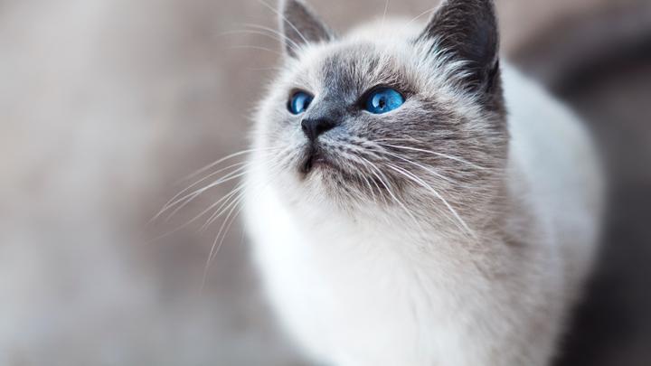 pelo-gatos