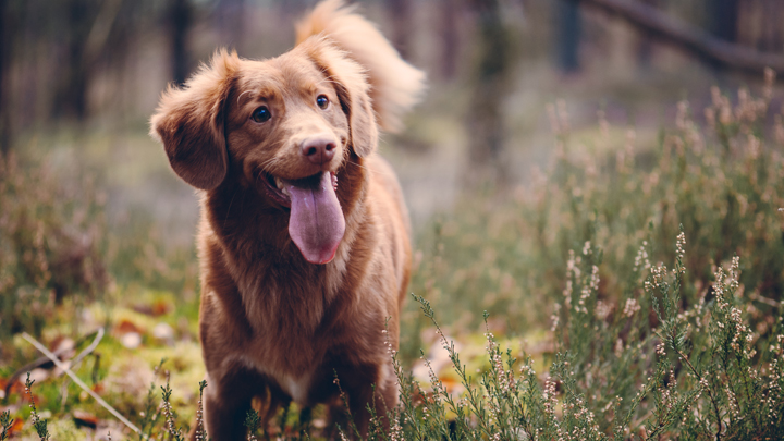 perros-terapia-genica