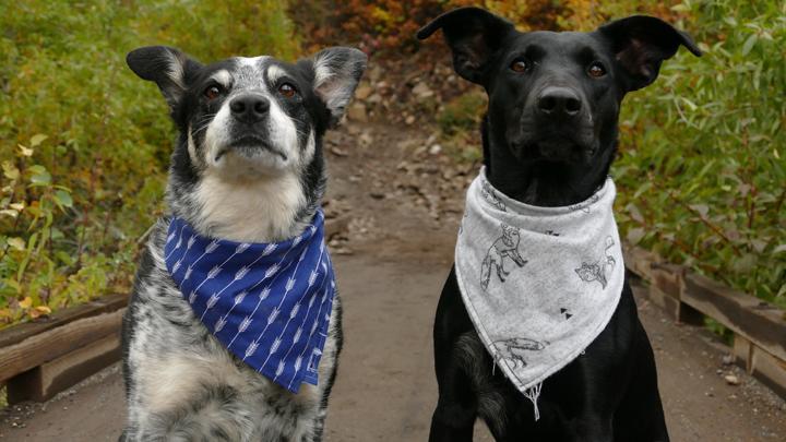 perros-canosos