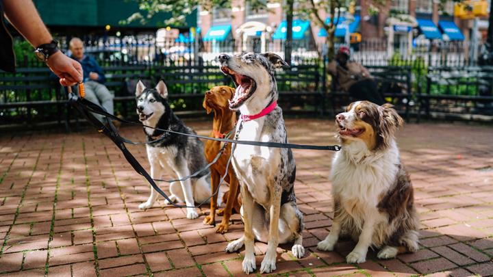 perros-comunidad