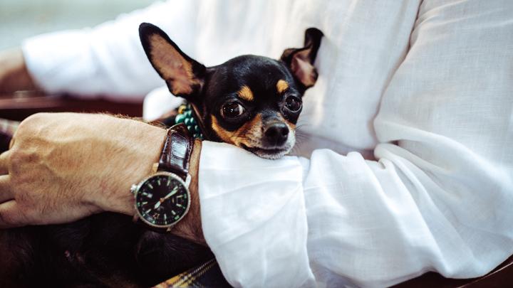 perros-mini
