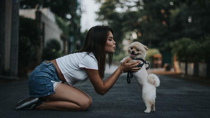 perros-lamer