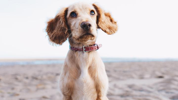 enfermedades-perro-verano
