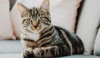 Consejos para eliminar el olor de orina de gato - Quitar olor a pis de gato ...
