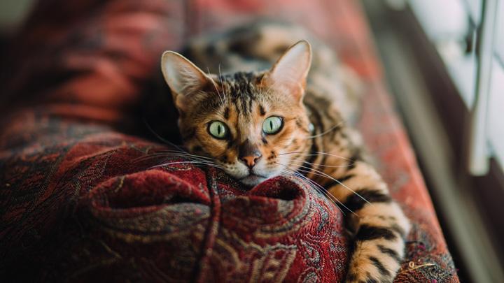 gatos-letargia
