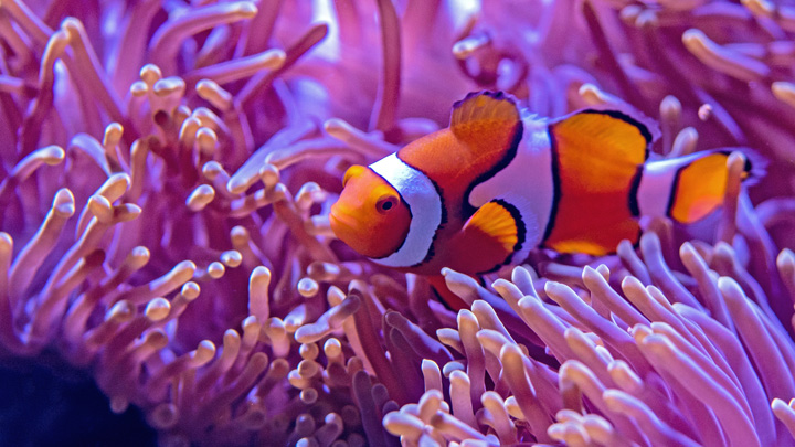 peces-alimentacion-vacaciones