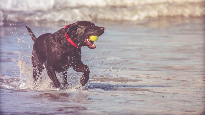 verano-perros