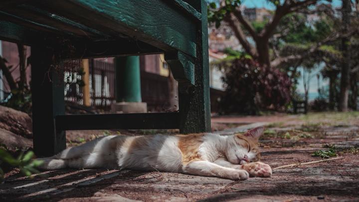 verano-gatos