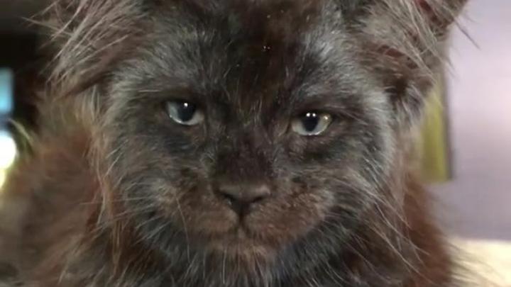 gato-persona