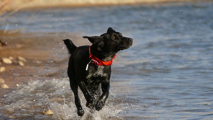 parques-acuaticos-perros