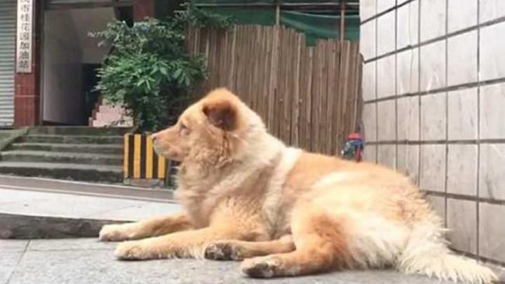 perro-esperando-dueno