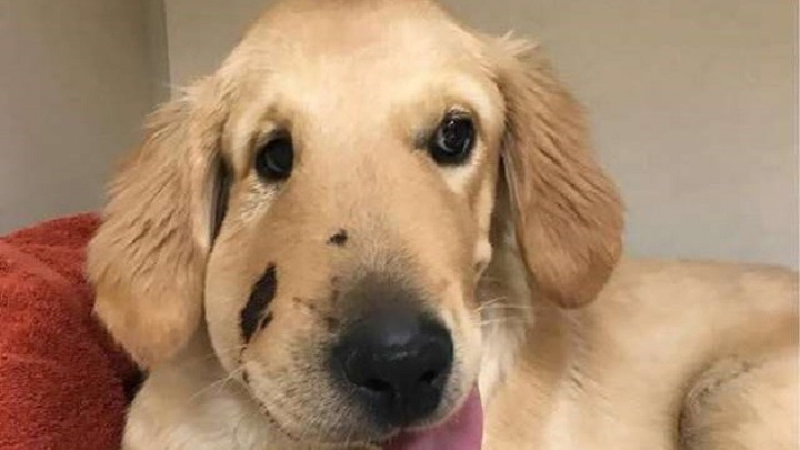 perro-salvavidas