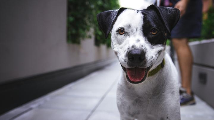 perros-orinar