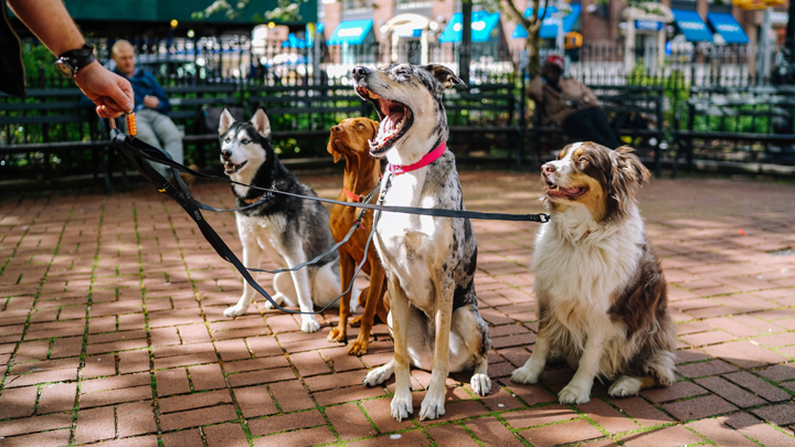 perros-paseo