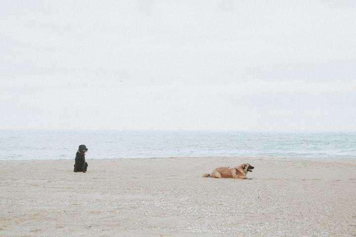 playa- perros