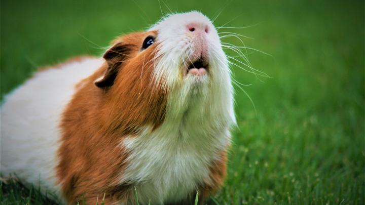 hamster-ola-calor