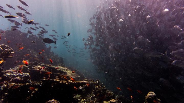 plantas-acuario