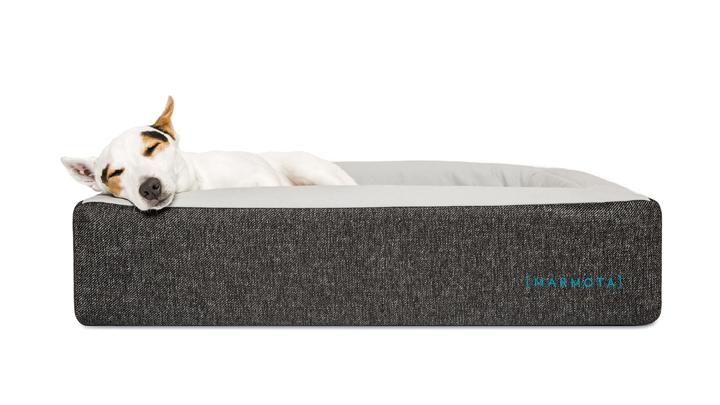 perro-colchon
