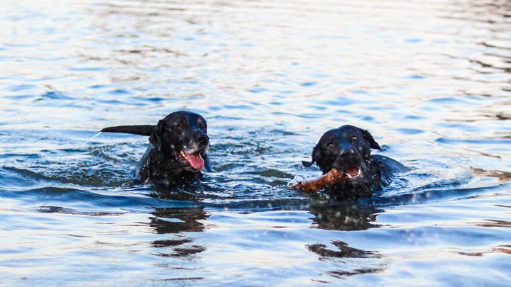 perros-mar