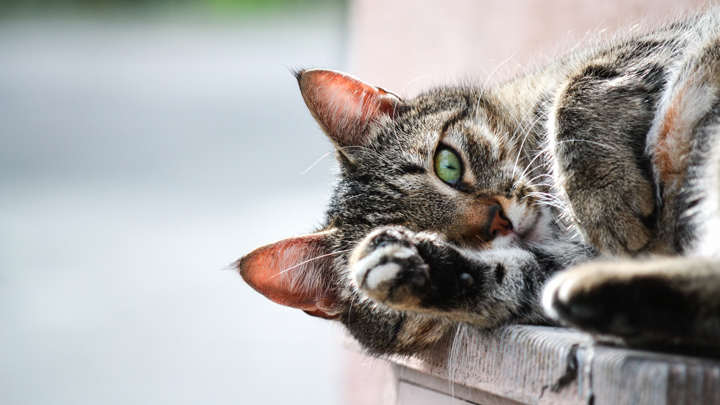 reanimacion-gato