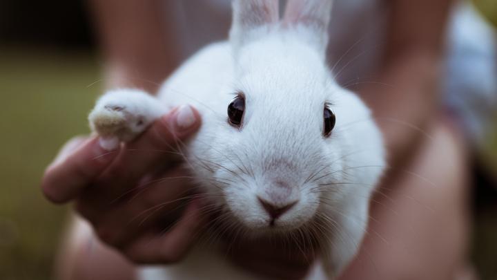 conejo-lenguaje