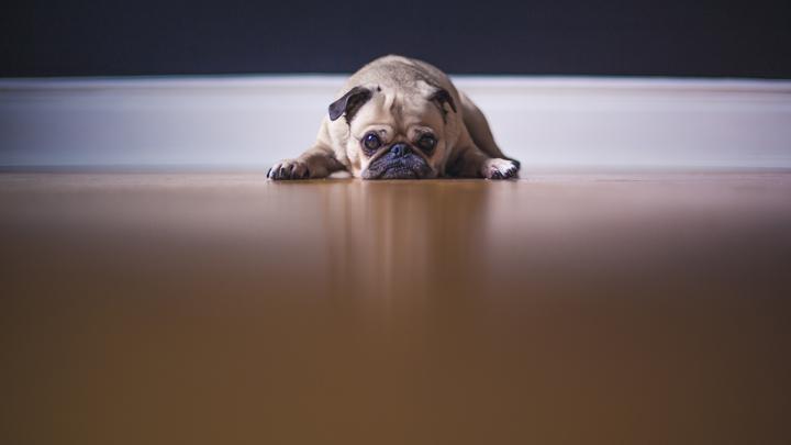 depresion-postvacacional-perros
