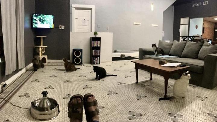 abuelo-gatos