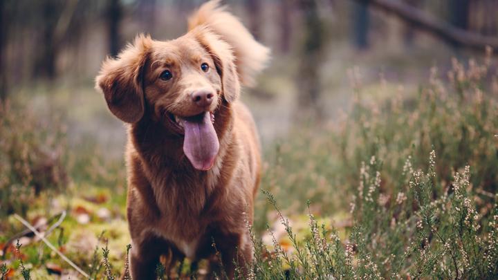 heces-perro