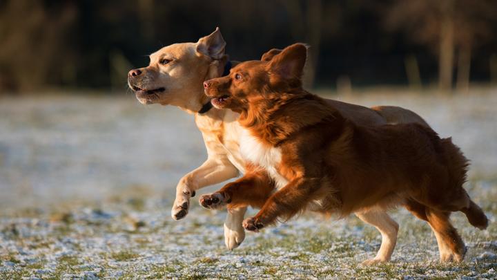 ejercicio-perros