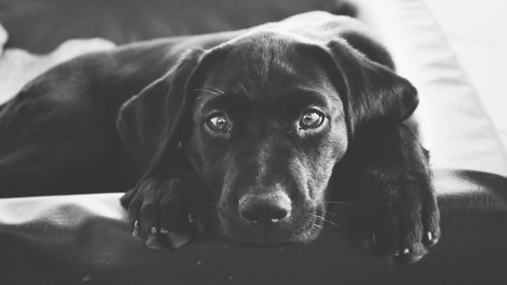perros-muerte