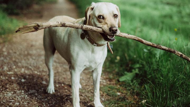 perros-pulseras-actividad