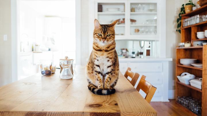 alergias-mascotas