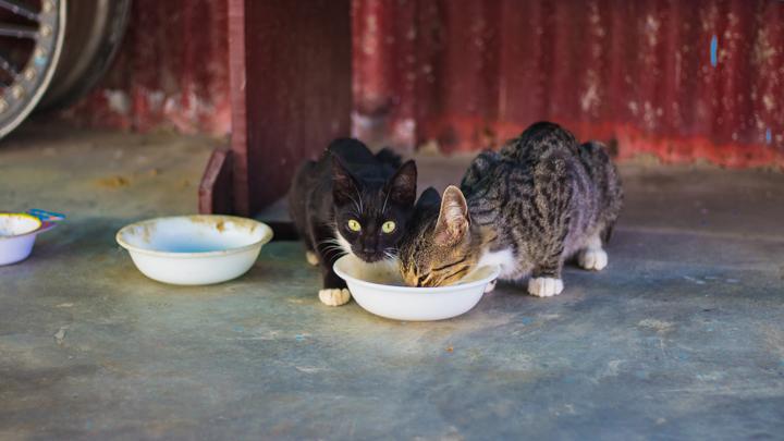 alimentacion-gatitos