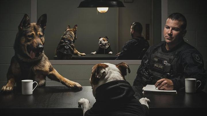 calendario-perros