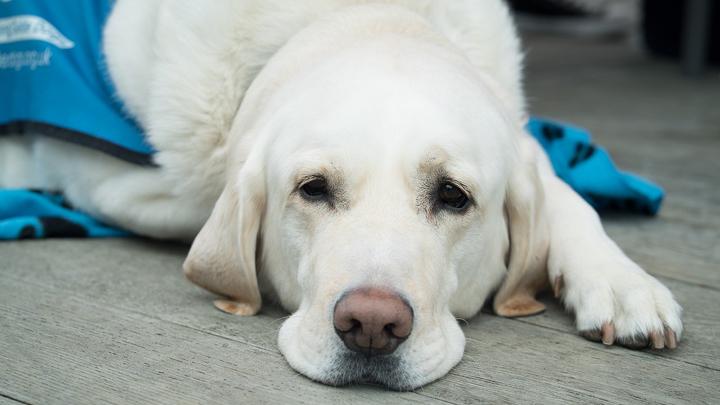 castracion-perros