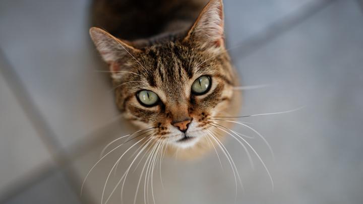 gatos-agua