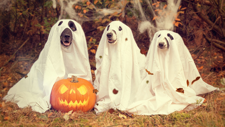 halloween-mascotas