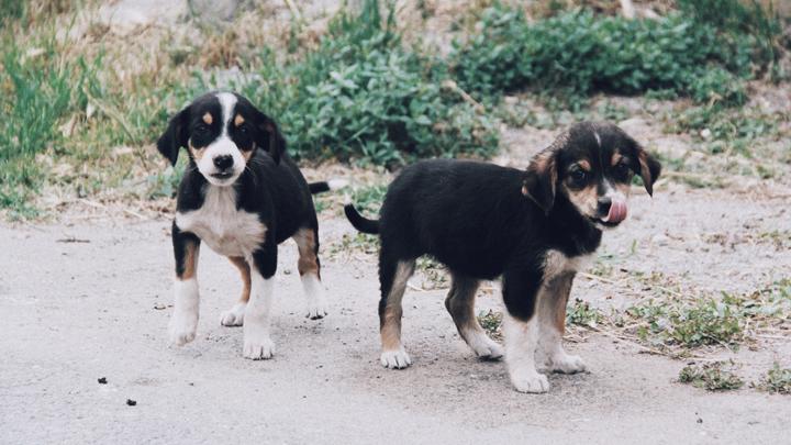 perros-vida