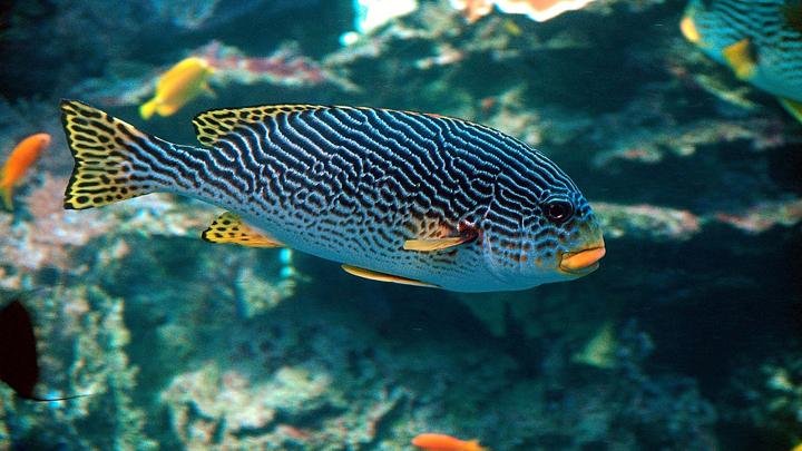 estres-peces