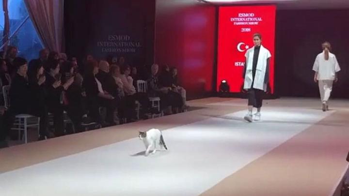 gato-pasarela