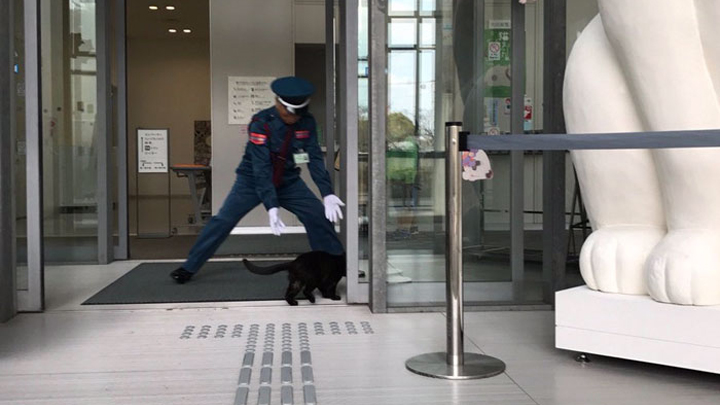 gatos-museo