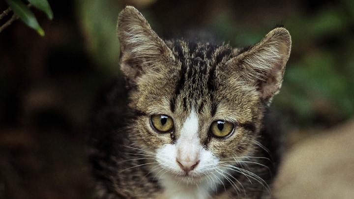 gatos-no-comen