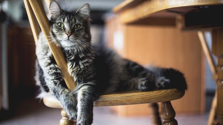 gatos-nuevo-hogar